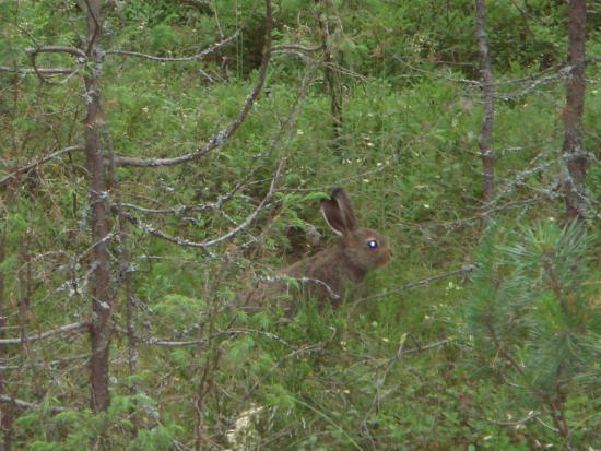 по трассе бегают зайцы :)
